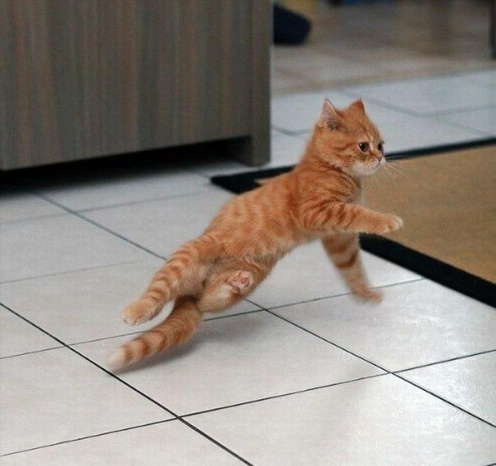 gatos dançando 20