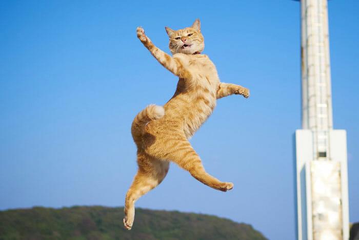 gatos dançando 3
