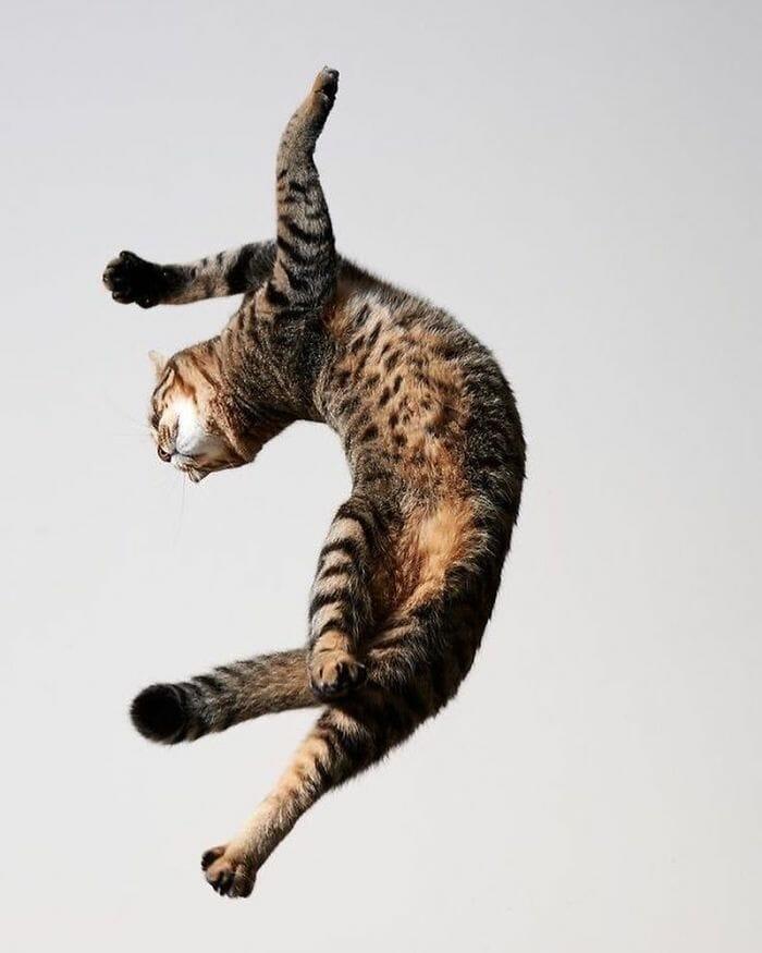 gatos dançando 5
