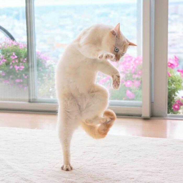 gatos dançando 6