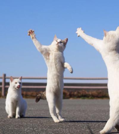 20 fotografias que mostram que os gatos são ótimos dançarinos