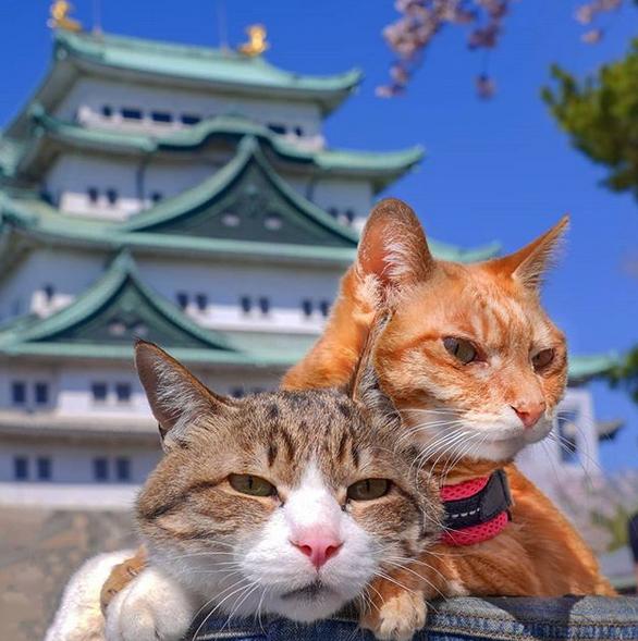 gatos viajantes 1