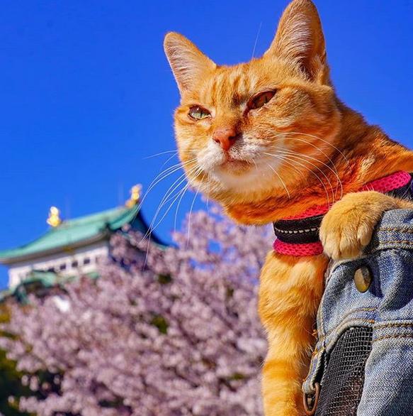 gatos viajantes 10