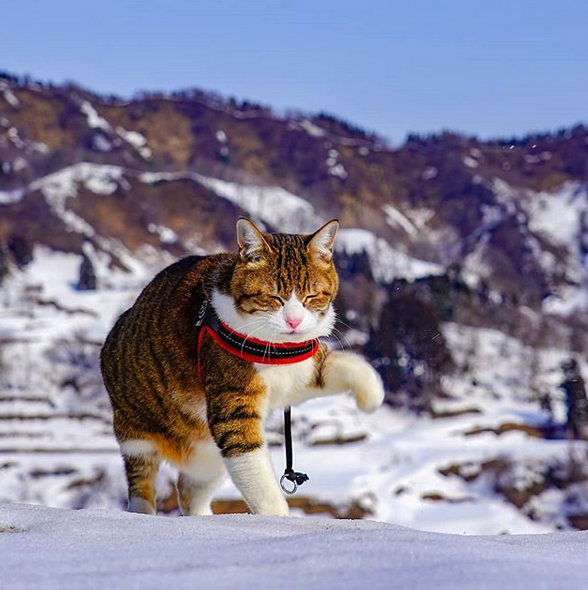 gatos viajantes 3