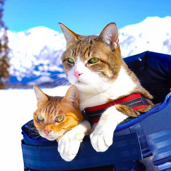 gatos viajantes 4