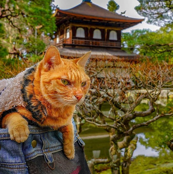 gatos viajantes 5