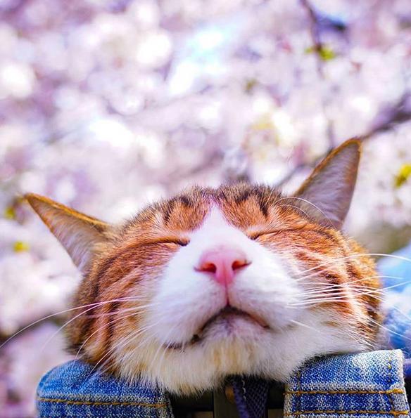 gatos viajantes 6