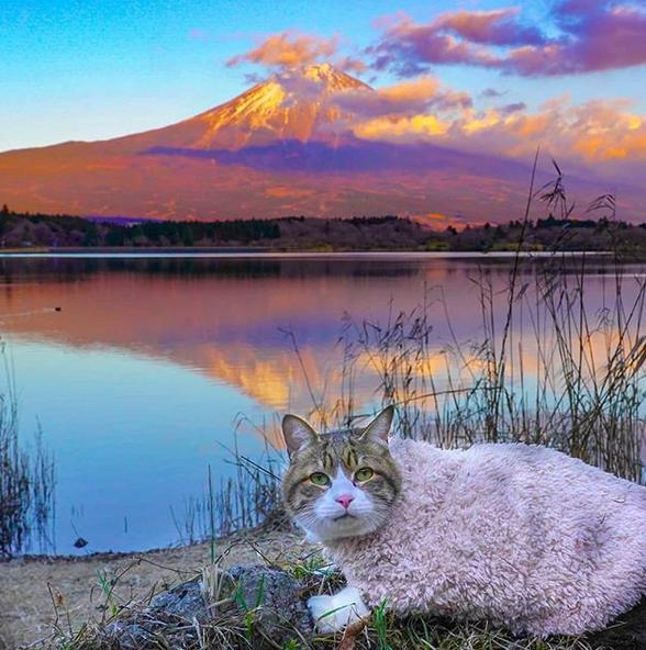 gatos viajantes 7