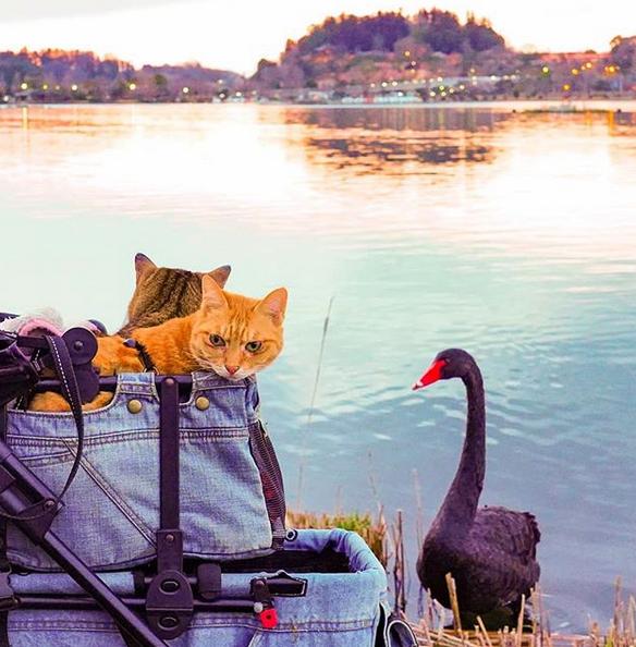 gatos viajantes 8