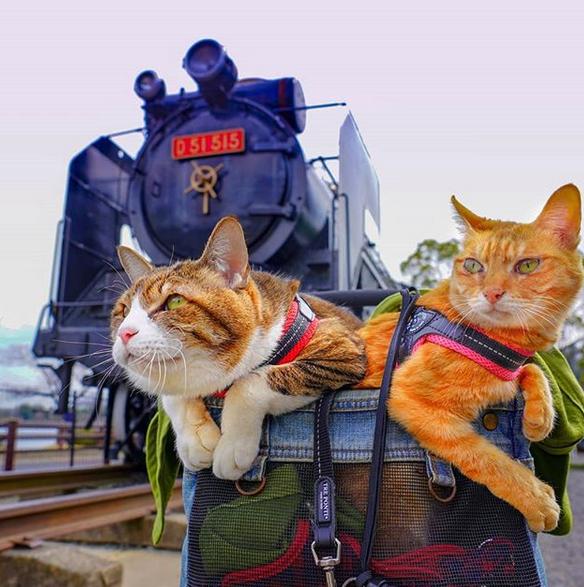 gatos viajantes 9