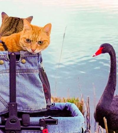 Japonês leva seus gatos para passeios pelo país e cria um Instagram imperdível