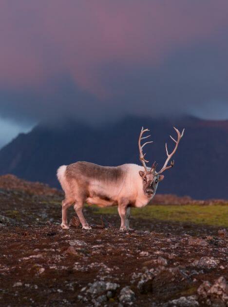 paisagens da noruega 12