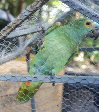 Papagaio 'preso' após avisar chegada da Polícia é transferido para zoobotânico