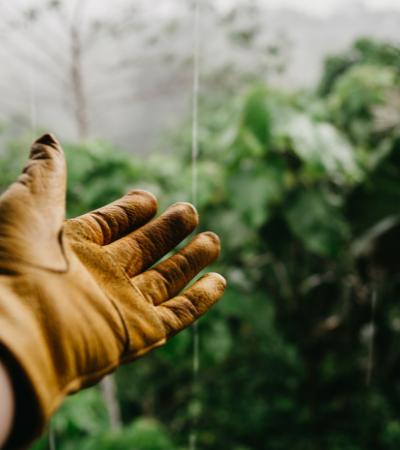 Mais de 1 milhão de jardineiros e agricultores criam rede global para salvar abelhas e borboletas