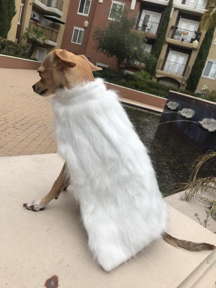 roupa cachorro GOT 8