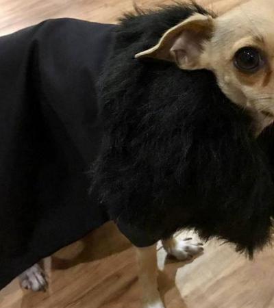 Roupas de cachorro inspiradas em Game of Thrones são apenas maravilhosas