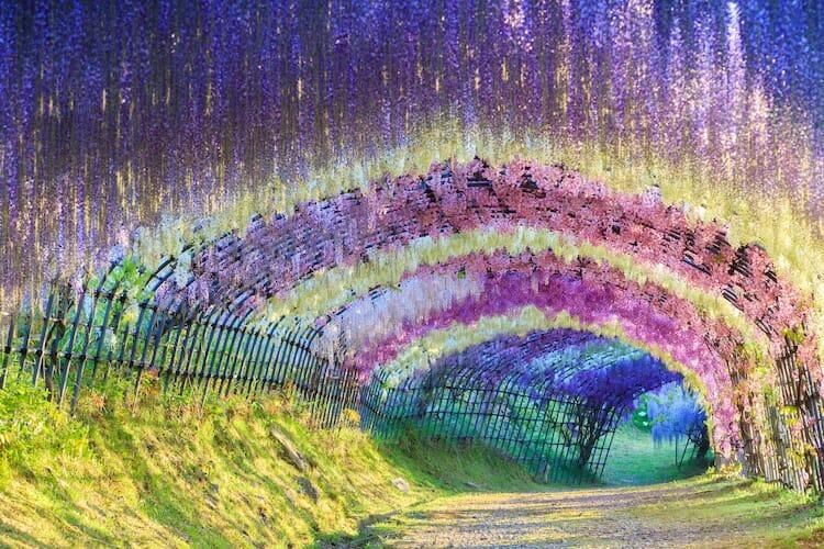 túnel flores japão 1