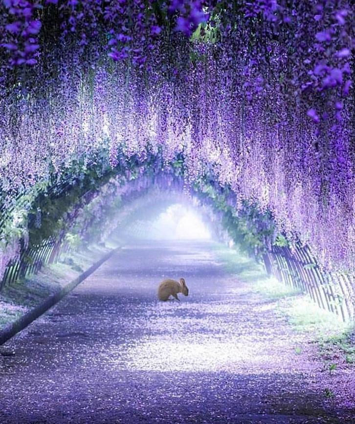 túnel flores japão 3
