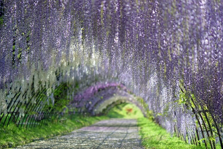 túnel flores japão 4
