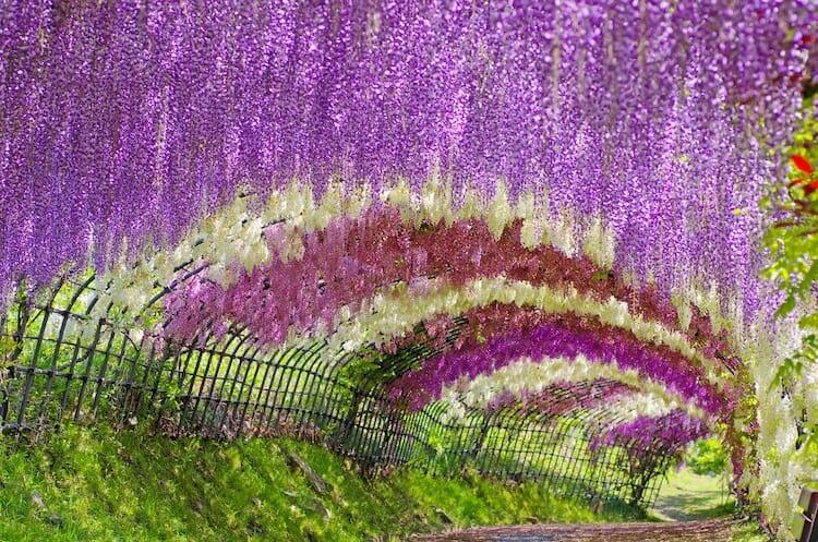 túnel flores japão 6