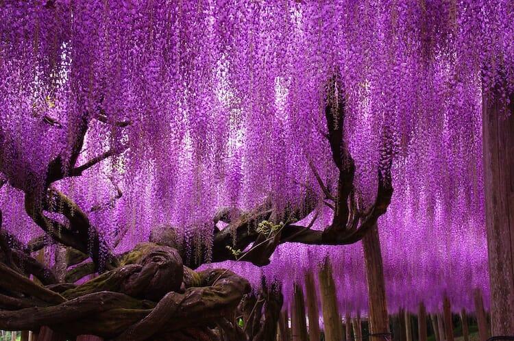 túnel flores japão 7