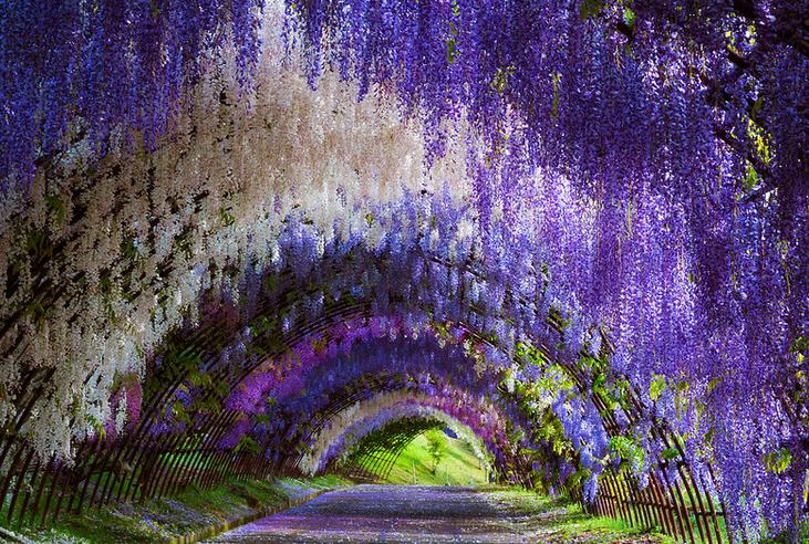 túnel flores japão 8