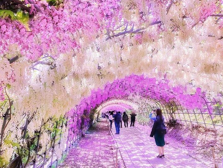 túnel flores japão 9