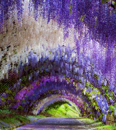 Este túneis de árvores do Japão parecem saídos de contos de fadas