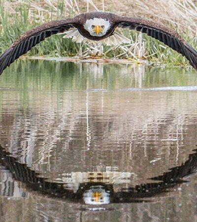 Foto genial de águia que viralizou foi tirada por fotógrafo amador