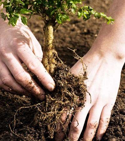 Para se formar, estudantes das Filipinas agora precisam plantar 10 árvores