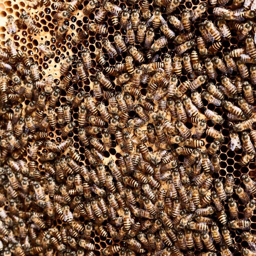 agrotóxico inofensivo abelhas 1