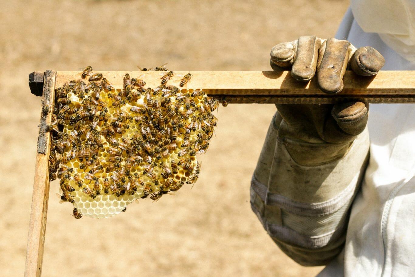 agrotóxico inofensivo abelhas 2