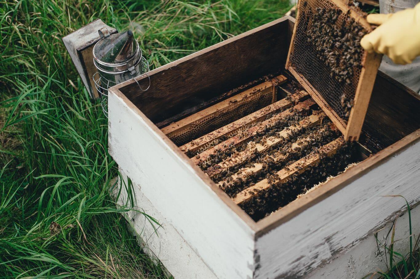 agrotóxico inofensivo abelhas 3