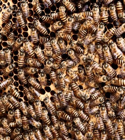 Agrotóxico tido como 'inofensivo', muda comportamento de abelhas