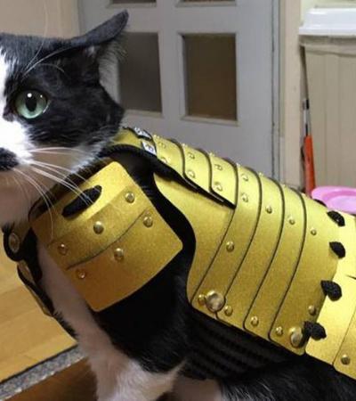 Empresa japonesa cria armaduras samurai especiais para cães e gatos