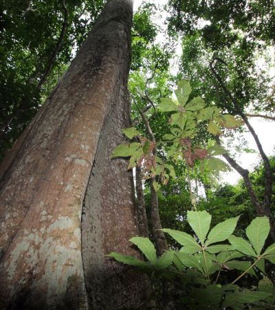 1 milhão de espécies de animais e plantas correm risco de extinção, diz ONU