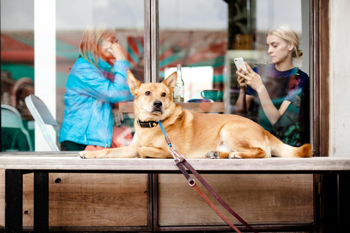 cachorro ambiente corporativo 3