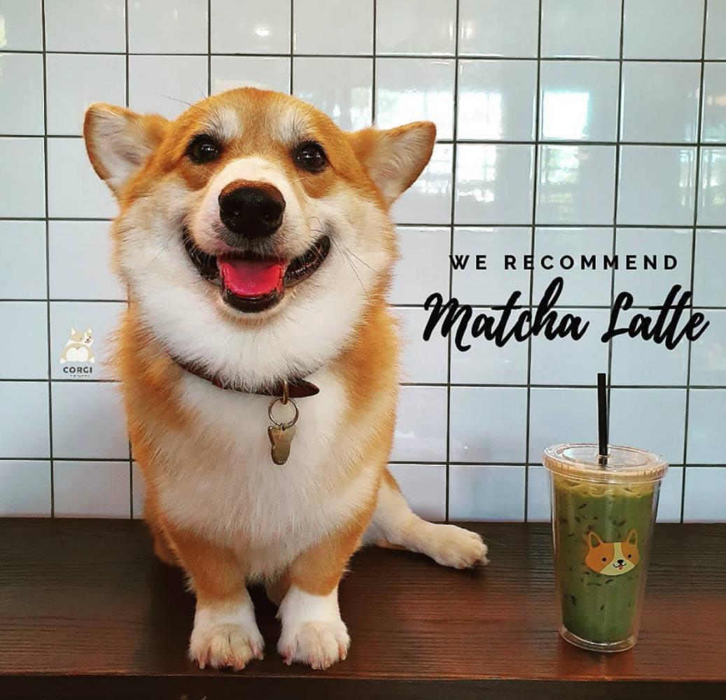 café cachorros tailândia 1