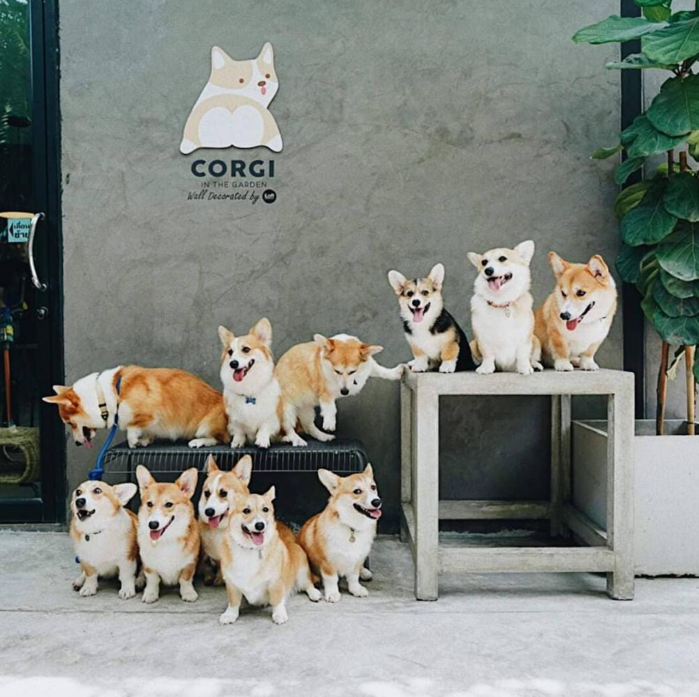 café cachorros tailândia 4