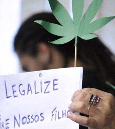 Por unanimidade, Anvisa aprova plantio de maconha medicinal