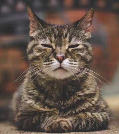Pesquisa comprova que gatos copiam as personalidades de seus donos