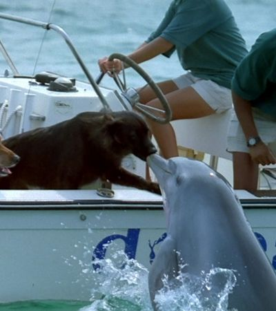 Golfinho sai da água para dar um selinho em um cachorro
