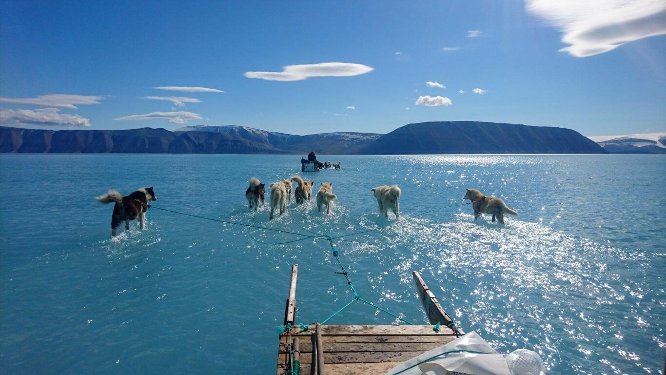 cães andando na água 1