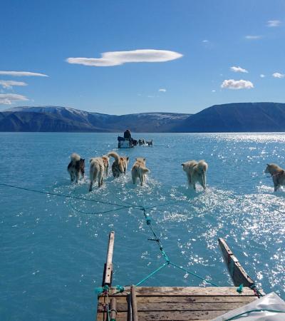 Foto de cães caminhando sobre a água mostra que o gelo está derretendo mais rápido do que esperávamos