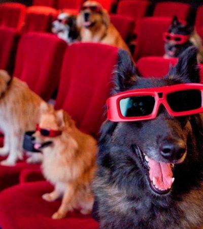 Shopping em SP oferece sessão de cinema pet friendly pra você e seu cão
