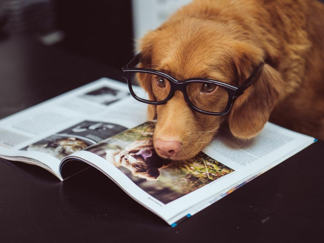Cachorros entendem o que falamos