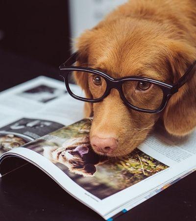 Cães podem sim compreender o que você diz, aponta estudo