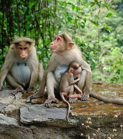 Animais são declarados legalmente 'pessoas' em províncias indianas