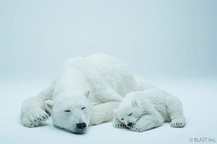 esculturas urso polar 2