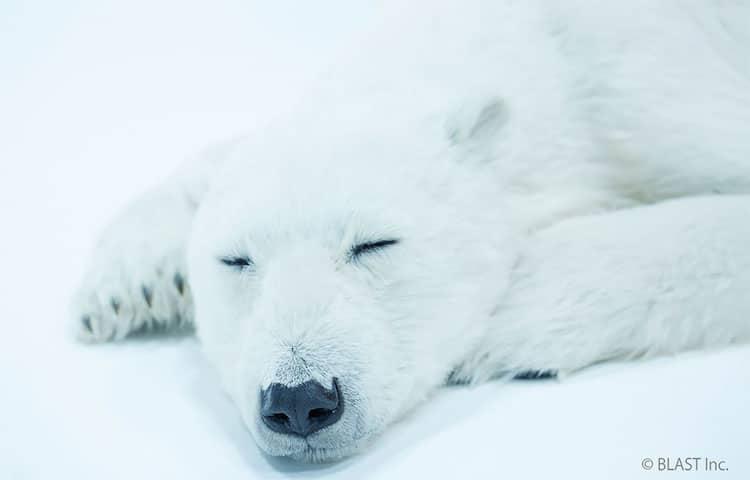 esculturas urso polar 3